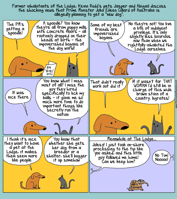 The story of the Prime Minister, the dog, the cat and the other dog