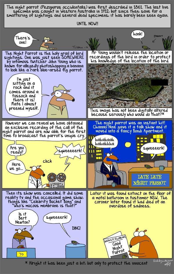 Pezoporus occidentalis: The truth!