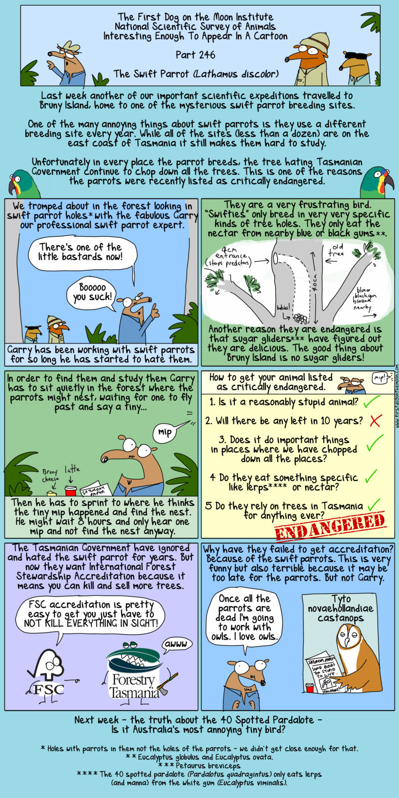 Swift Parrots: why do they suck?