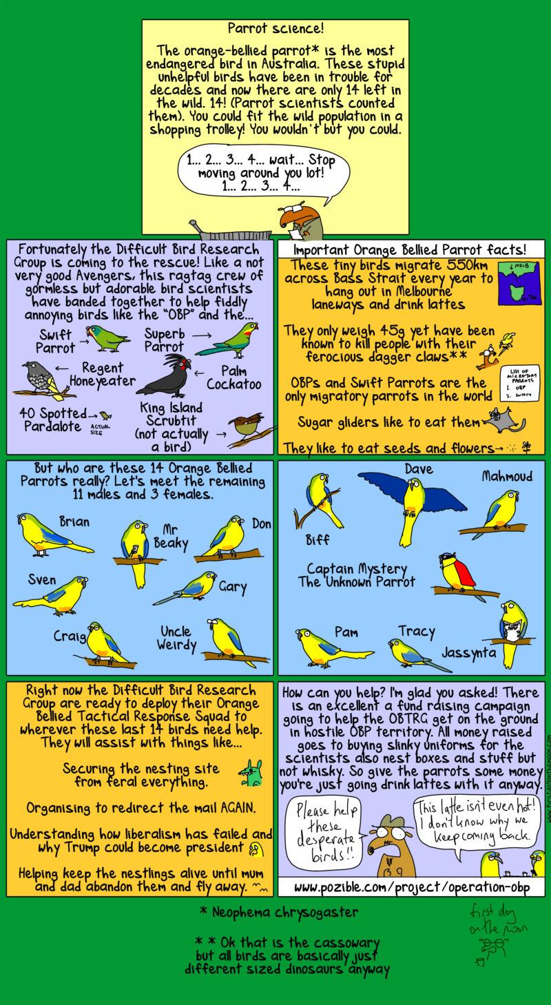 help save the orange-bellied parrots