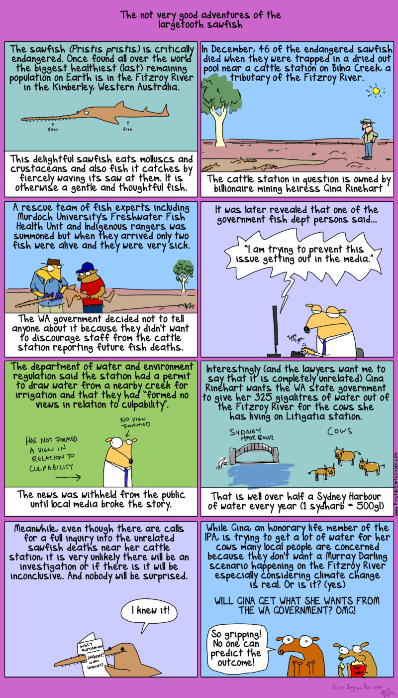 Gina Rinehart and the not very good adventures of the dead sawfish